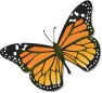 Monarch_butterfly 2